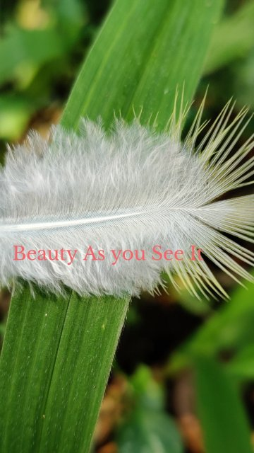 Beauty As you See It