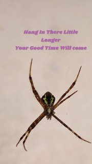 Hang In There Little Longer Your Good Time Will come