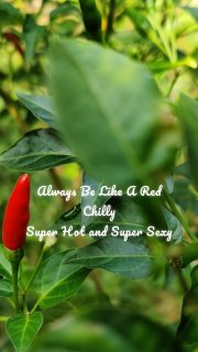 Always Be Like A Red Chilly Super Hot and Super Sexy