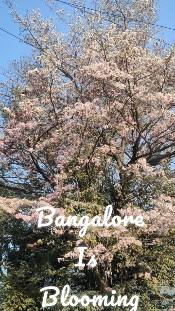 Bangalore Is Blooming